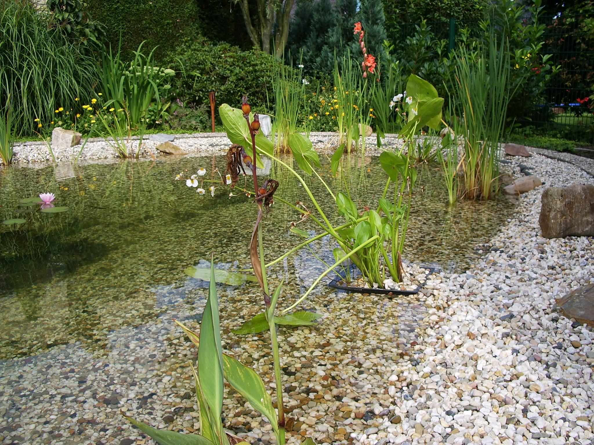 Gemeinsame Natürliche Gestaltung von Schwimmteichen und Gartenteichen &DA_24